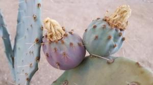 Desert-Cactus-Yucca-Valley-California
